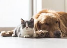 Услуги выгула собак, кошек.(Соломенский и Дарницкий район)