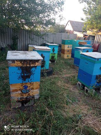 Продам пчел и улики
