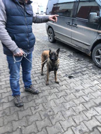 Нашлась собака