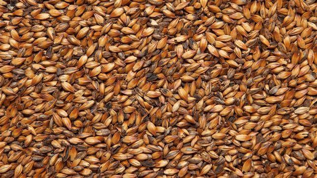 Солод Карамельний Пивоварний (Caramel Malt 200 EBC) 26 грн