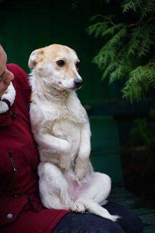 Собака друг, привита, стерильна