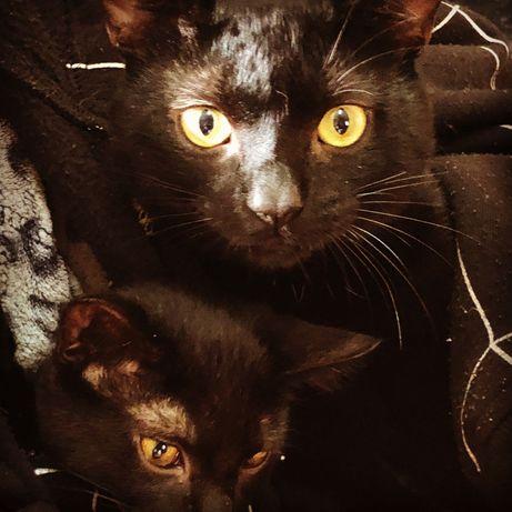 Dão-se gatinhos -Adoção responsável
