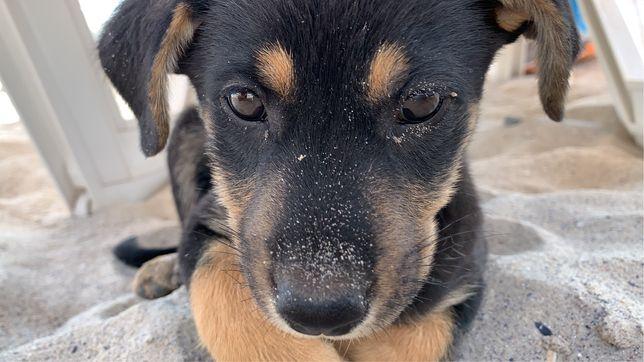 отдадим собаку в добрые руки