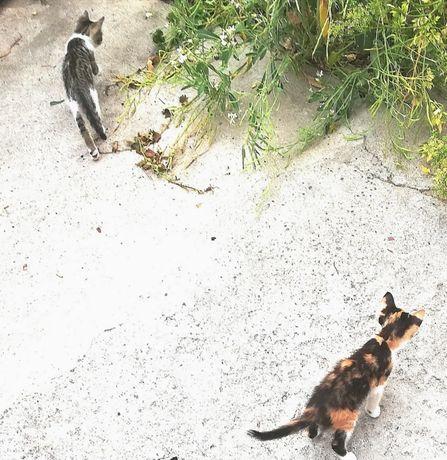Tenho estas 2 gatinhas e um gatinho