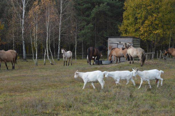 Sprzedam ziemie rolną na KRUS 1,76 ha rolnego/ 1,02 ha przeliczeniowy
