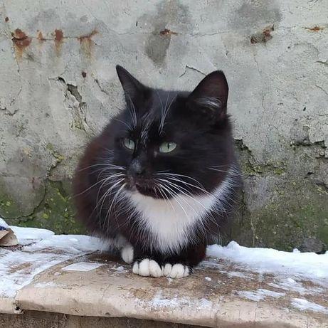 Отдам черно белую кошку, стерилизована,  2 года