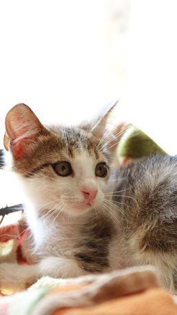 Котёнок, котята, котик, котики в добрые руки