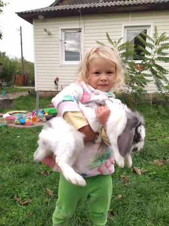 Продам ручного кролика. Самка 7 міс.