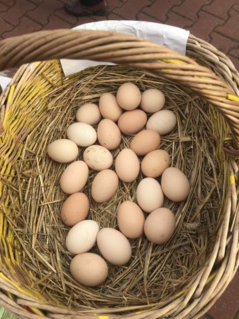 Świeże jajka jaja kurze