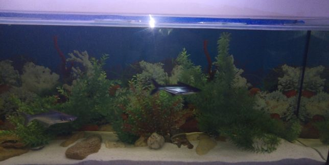 Новый аквариум 200см- 46см - 70см. Доставка по Украине