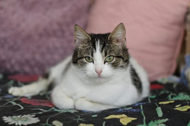 Tatiana – młoda kotka do adopcji