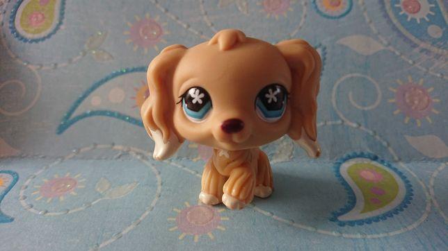 Oryginalny Littlest Pet Shop Spaniel 748 Piesek