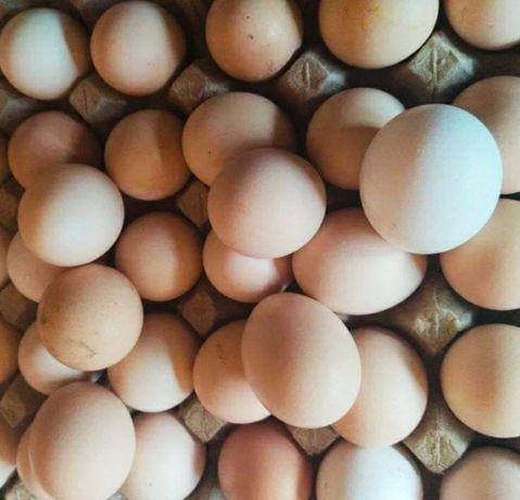 Продам домашні яйця