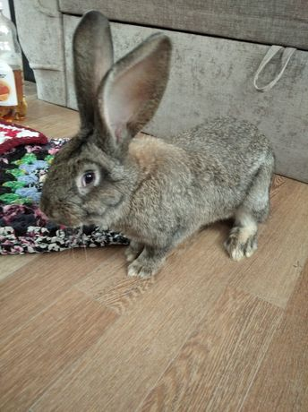 Кролики домашніі