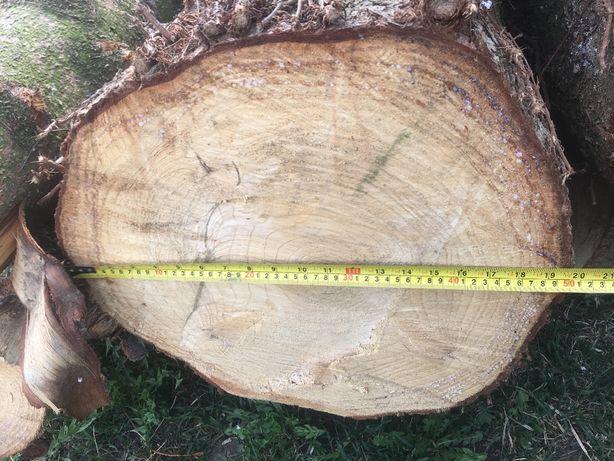 drzewo świerkowe