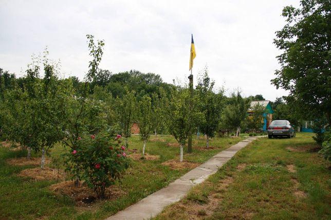 Готовий бізнес яблуневий сад , бджільництво , апітерапія!