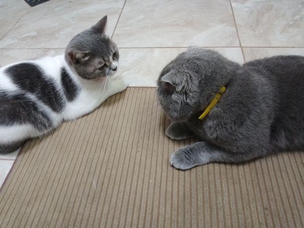 симпатичний котик запрошує на побачення
