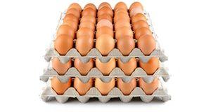 Jaja z kur z wolnego wybiegu
