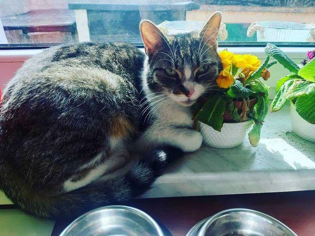 Zaginęła kotka Fela