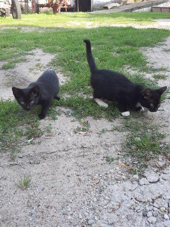 Oddam kotki w fobre rece maja 3 miesiące