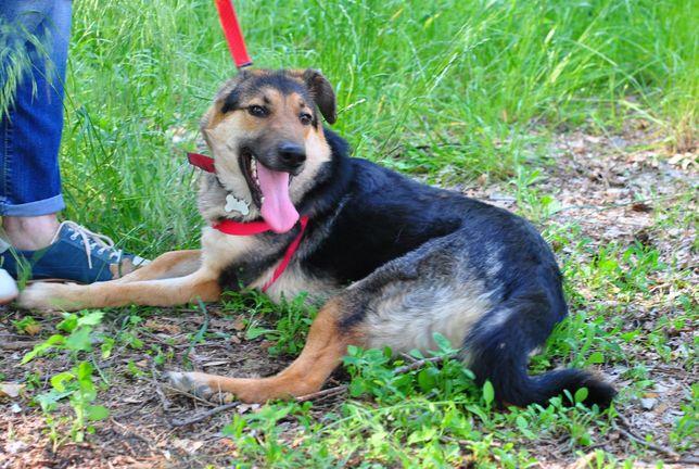 темненькая трогательная собачка, 14 кг, девочка, 1год