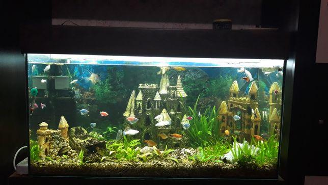 Аквариум с рыбками на 200 литров