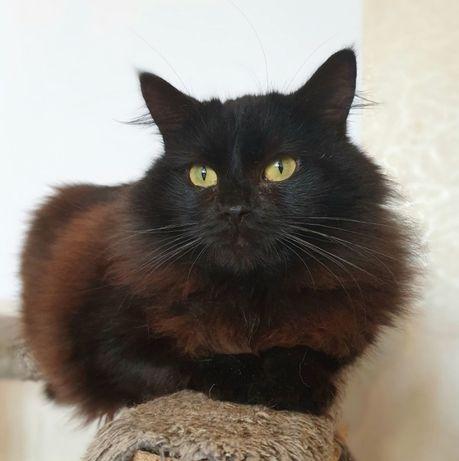 Кошечка Багира 1.5 лет стерилизована. Котики, котята, кошечка