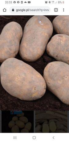 Innovator frytka ziemniak