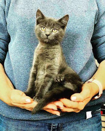 Котенок Тима ищет семью котенок котята кошеня кот кошка котеня