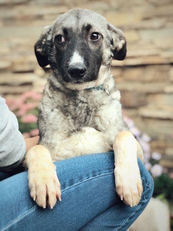 Красивая и скромная собака по имени Оливка ищет семью!