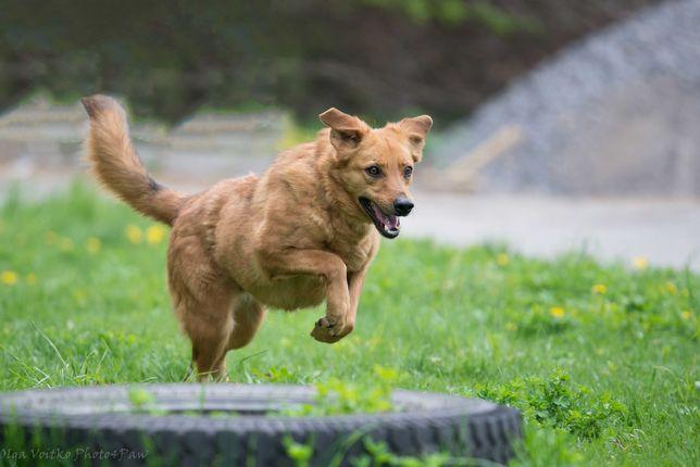 Отдам в хорошие руки замечательного солнечного пса Филда.