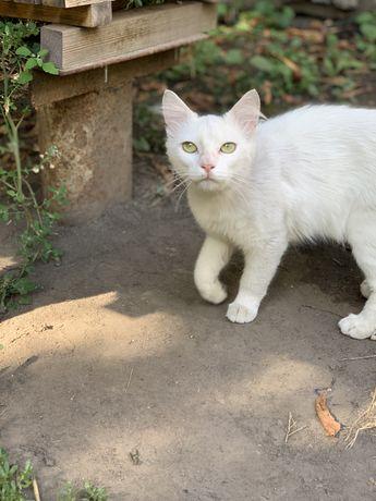 Найден кот, Центр Шевченко  (Хлебзавод)
