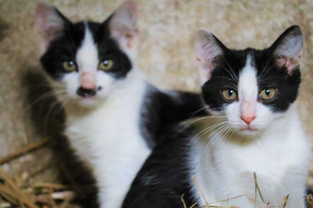 Piękne małe koty za darmo!