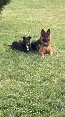 Szkolenie psów/ Psi trener WAKACYJNA PROMOCJA !!