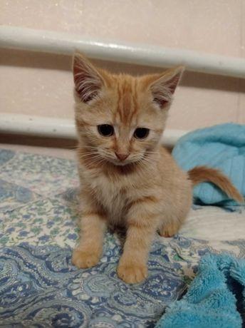 Отдам бесплатно котёнка, мальчик-рыжык, отроду месяц, к лотку приучен.