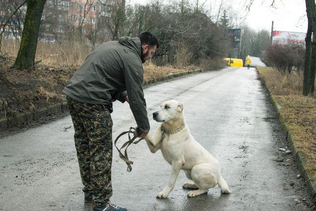 Tresura, szkolenia dla psów, Profesjonalne szkolenie Warszawa Wawer