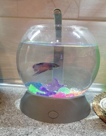 Маленький аквариум шар Tetra Betta Bowl 1.8 л