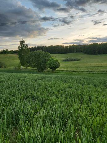 Sprzedam działki rolne Gorło