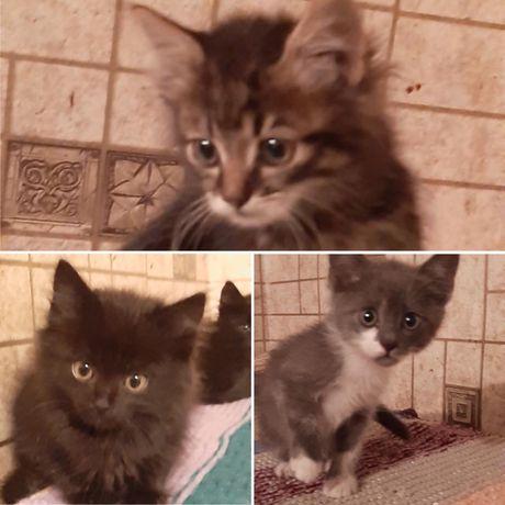Кошеня 1,5 місяці