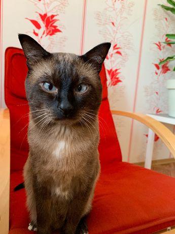 БЕСПЛАТНО Тайский кот для вязки