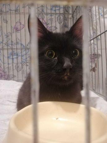 Найден черный кот, очень нужен дом найденышу