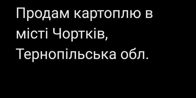Продам картоплю в місті Чортків, Тернопільська обл.