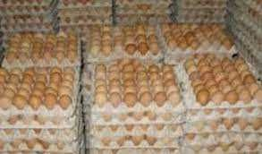 Бройлер Инкубационное Яйцо КОББ 500 молодка Украина