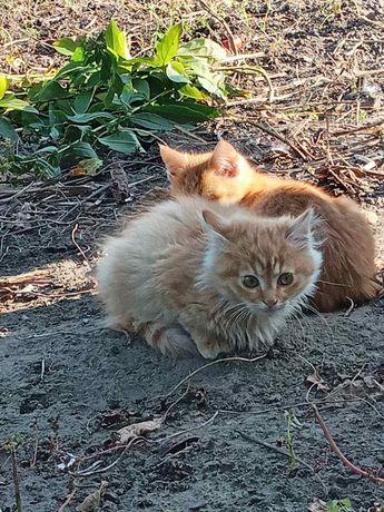 Милые котята, в добрые руки
