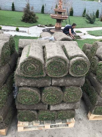 Автополив газонов. Укладка, посев газона. Цена газона 65 грн/м2.