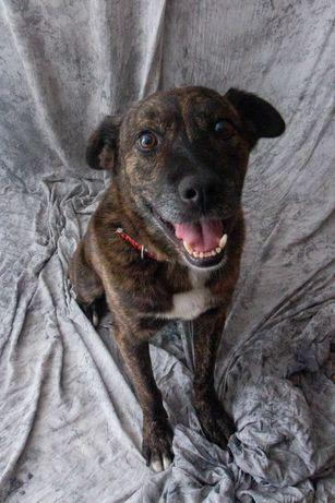 Spud - cão de porte médio - cerca de 3 anos