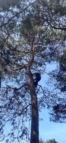 Solidnie i tanio wycinka drzew i krzewów sprzątanie działek koszenie