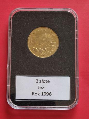 1996r. Moneta 2zł GN Jeż, w slabie.