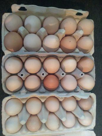 Jaja wiejskie z wolnego wybiegu.