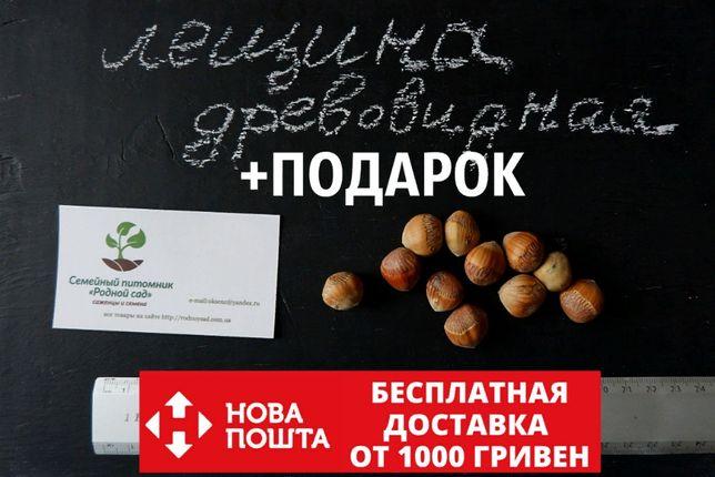 Лещина древовидная 10 штук семена, медвежий орех(для саженцев фундука)